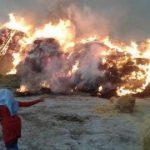 ۵۰ تن علوفه در آتش سوخت