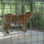 باغوحش، هم تفریح و هم تحقیق!
