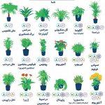 با نگهداری این گلها از آلودگی هوا فرار کنید!/ فهرست پیشنهادی در تحقیقات ناسا