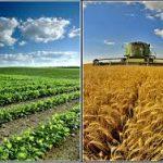 ۱۲۱ کشاورز نمونه خراسان رضوی انتخاب شدند