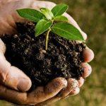 سرپرست معاونت خدمات شهری شهرداری مشهد عنوان کرد؛ پیشبینی توزیع ۲۳۵ هزار درخت و ۱۵ هکتار درختکاری