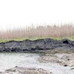۹۰ هکتار درختکاری در کشف رود
