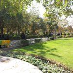 شهردار خبر داد؛ افزایش سرانه فضای سبز مشهد تا ۱۶ متر مربع