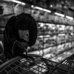 باند قاچاق بین المللی پرندگان در مشهد منهدم شد