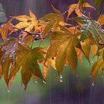 خراسان رضوی بارانی خواهد شد