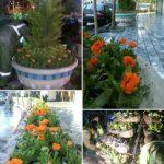 با کاشت ۲۵ هزاربوته گل حریم مطهر رضوی بهاری شد