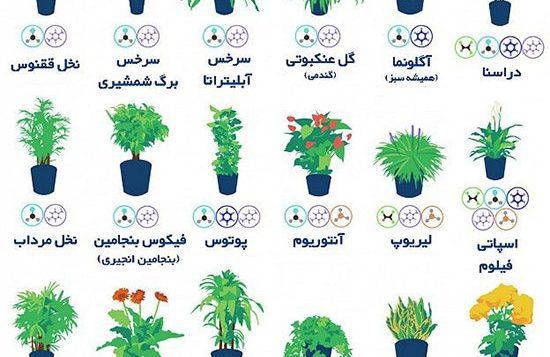 گیاهان تصفیه کننده آلودگی هوا
