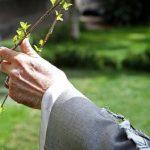 مهندس جلال قربانی شهردار منطقه ۲ خبر داد؛ هدیه نهال رایگان به شهروندان مشهدی در هفته درختکاری