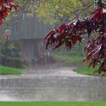 بارندگی شدید ۱۵ شهرستان خراسان رضوی را فراگرفت