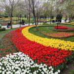 کاشت ۳۴۳ هزار گل پیازی لاله در بوستانها و معابر شهر مشهد