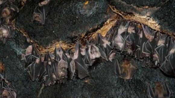 تنها غار مخوف خفاش ایران در کجا قرار دارد؟ +تصویر