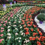 در قالب ۷۵۰ غرفه؛ هجدهمین نمایشگاه گل و گیاه مشهد عصر پنجشنبه افتتاح می شود